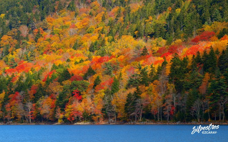 bosques_otoño_lagos_acadia_visitar