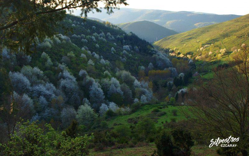 las_mejores_vistas_en_ezcaray_rutas_en_familia_cerezos_silvestres