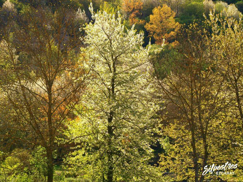 fotografías_ezcaray_imagenes_bosques_turismo_que_visitar