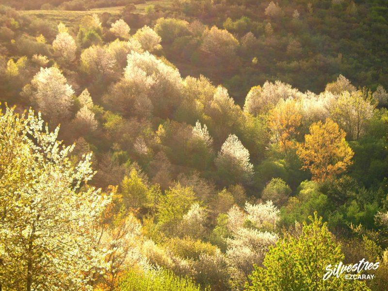 las_mejores_vistas_de_ezcaray_paisajes_panorámicas