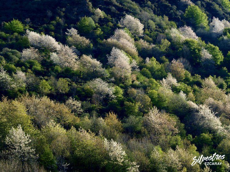 turismo_visitas_ezcaray_monte_montañas_bosques_ecosistemas