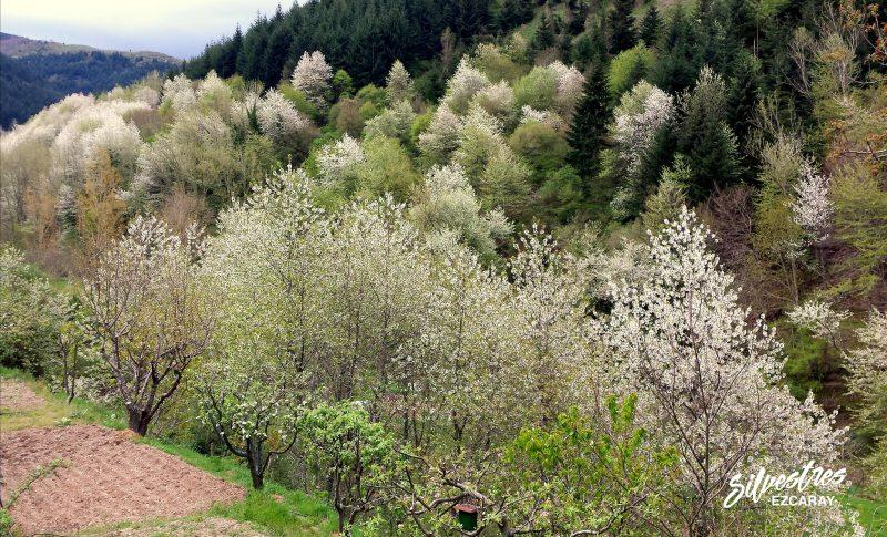 los_mejores_paisajes_ezcaray_sierra_demanda_excursiones