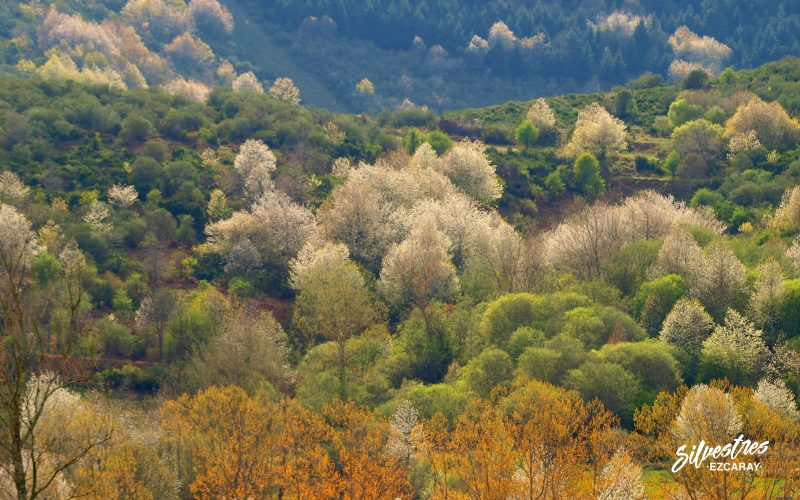 paisajes_bosques_fotografías_ezcaray_turismo_la_rioja