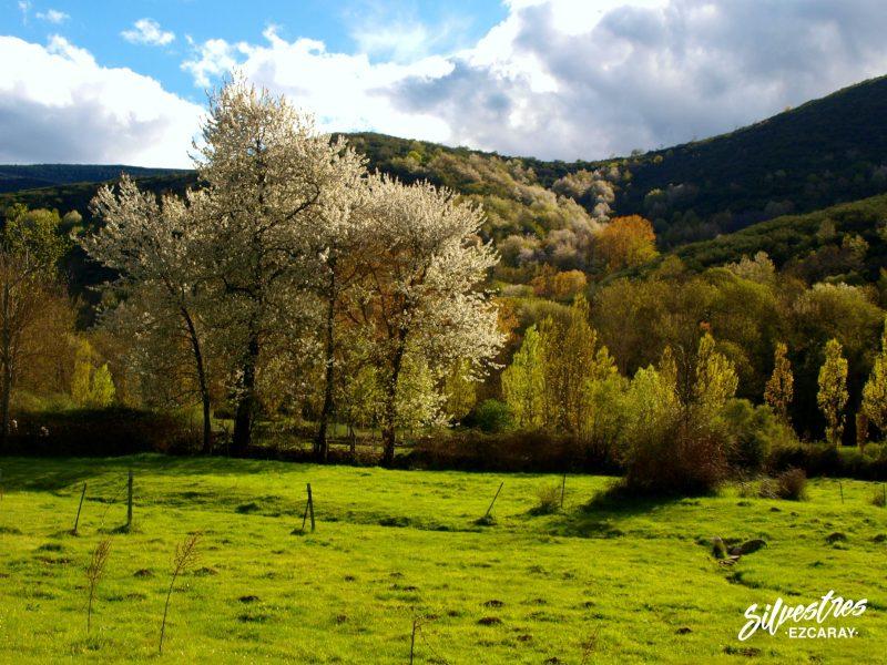 paisajes_de_ezcaray_que_ver_primavera_guia_silvestres_fotografías