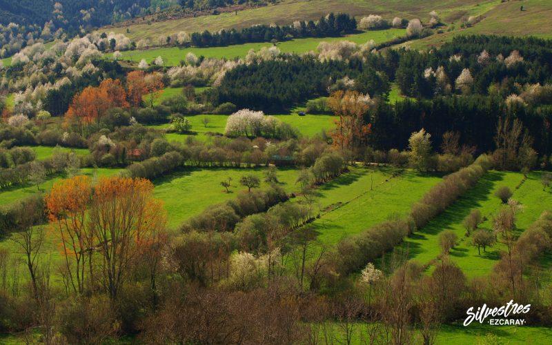 paisajes_valgañón_fotografías_imágenes_naturaleza