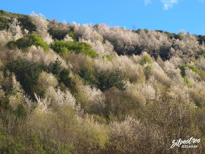 paisajes_bosques_ezcaray_primavera_que_hacer_actividades