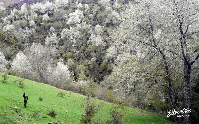 valgañón_floración_cerezos_la_rioja_naturaleza_excursiones_guiadas_semana_santa