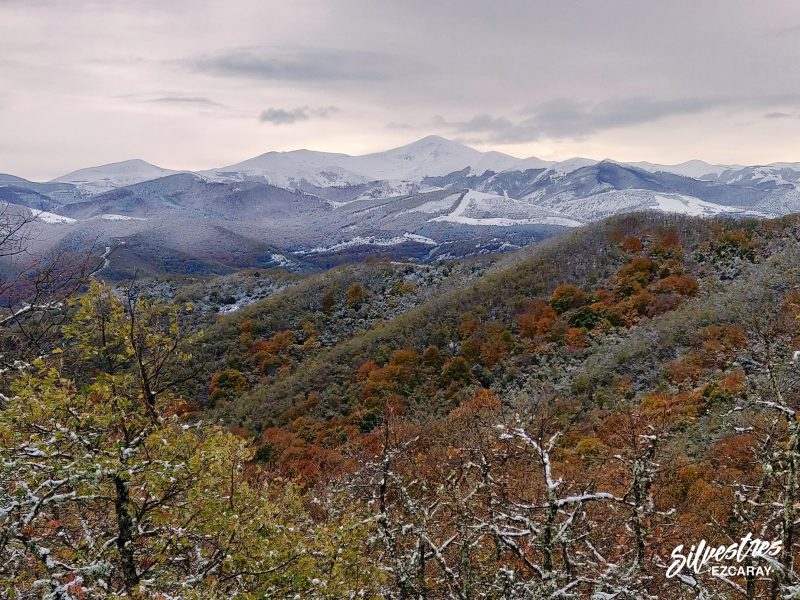 bosque_artaso_ojacastro_alto_oja_paisajes_san_lorenzo_otoño_nieve