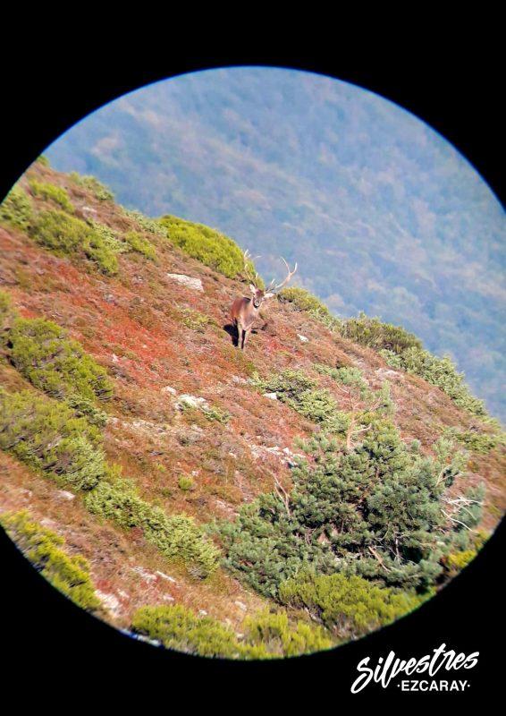 fauna_sierra_demanda_la_rioja_ciervos_berrea_ezcaray_montaña_turismo_visitas_familias