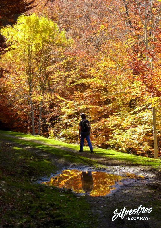 turismo_ezcaray_la_rioja_paseos_caminos_senderos_hayedos_otoño