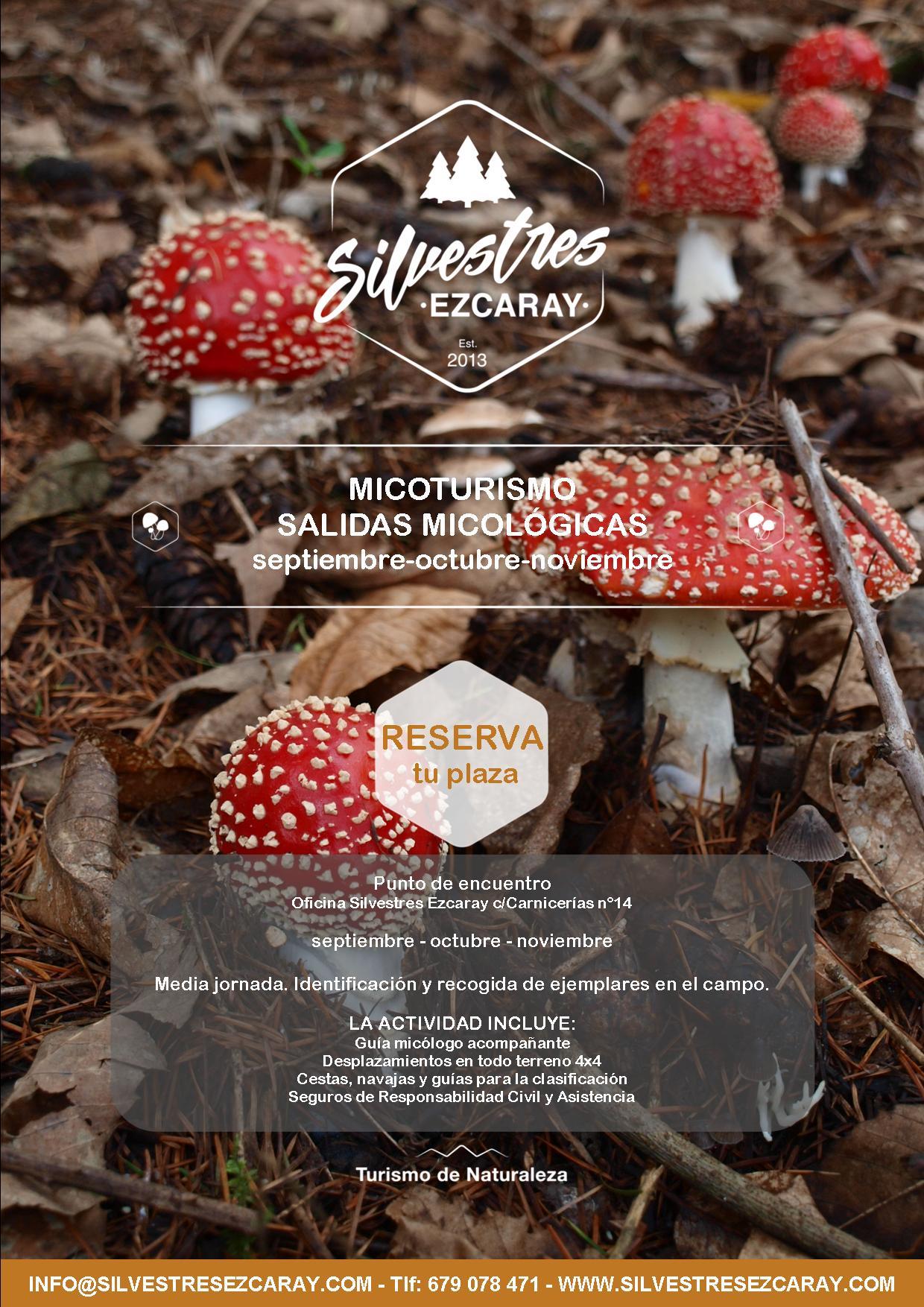 recoger_setas_hongos_boletus_ezcaray_la_rioja_turismo_otoño_alojamientos_jornadas_micológicas