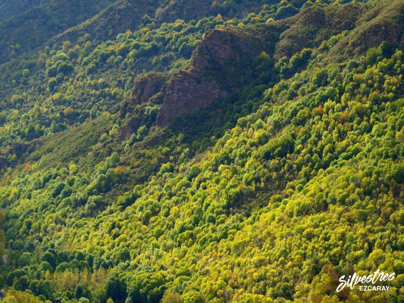 bosques_montes_montañas_ezcaray_valle_de_urdanta_otoño_que_hacer_rutas_senderismo_silvestres
