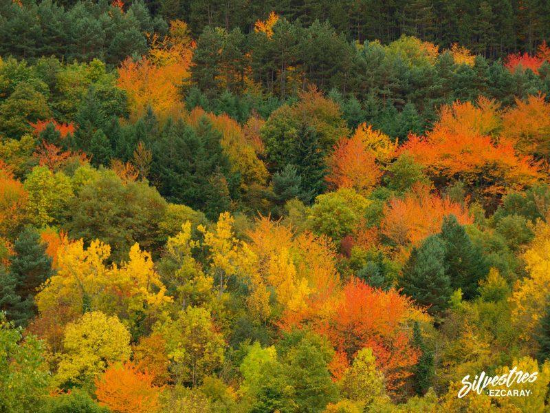 bosques_santurdejo_rutas_senderos_turismo_alto_oja_ezcaray_fotografías_la_rioja