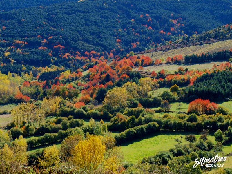 fotos_fotografías_entorno_natural_valgañón_cerezos_silvestres_turismo_pueblos_la_rioja_alojamientos
