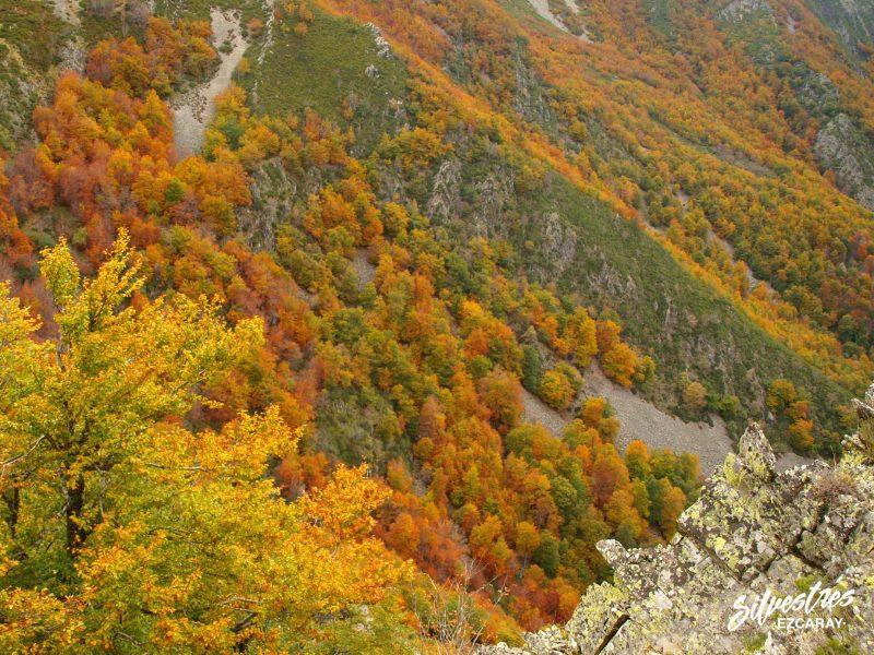 hayedos_montes_ezcaray_barranco_ortigal_montaña_paisajes