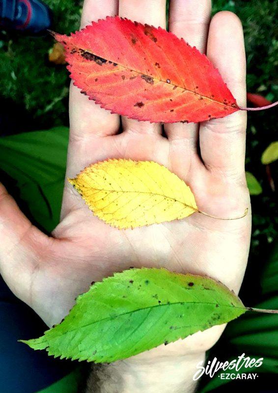 otoño_fotos_fotografía_árboles_pueblo_ezcaray_turismo_naturaleza_la_rioja_alojamientos