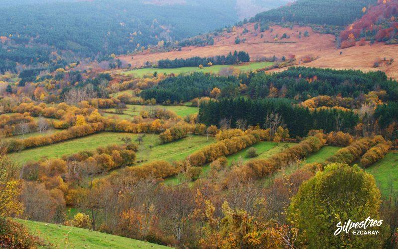paisajes_fotos_fotografías_naturaleza_valgañón_bosques_de_sauces_saucedas