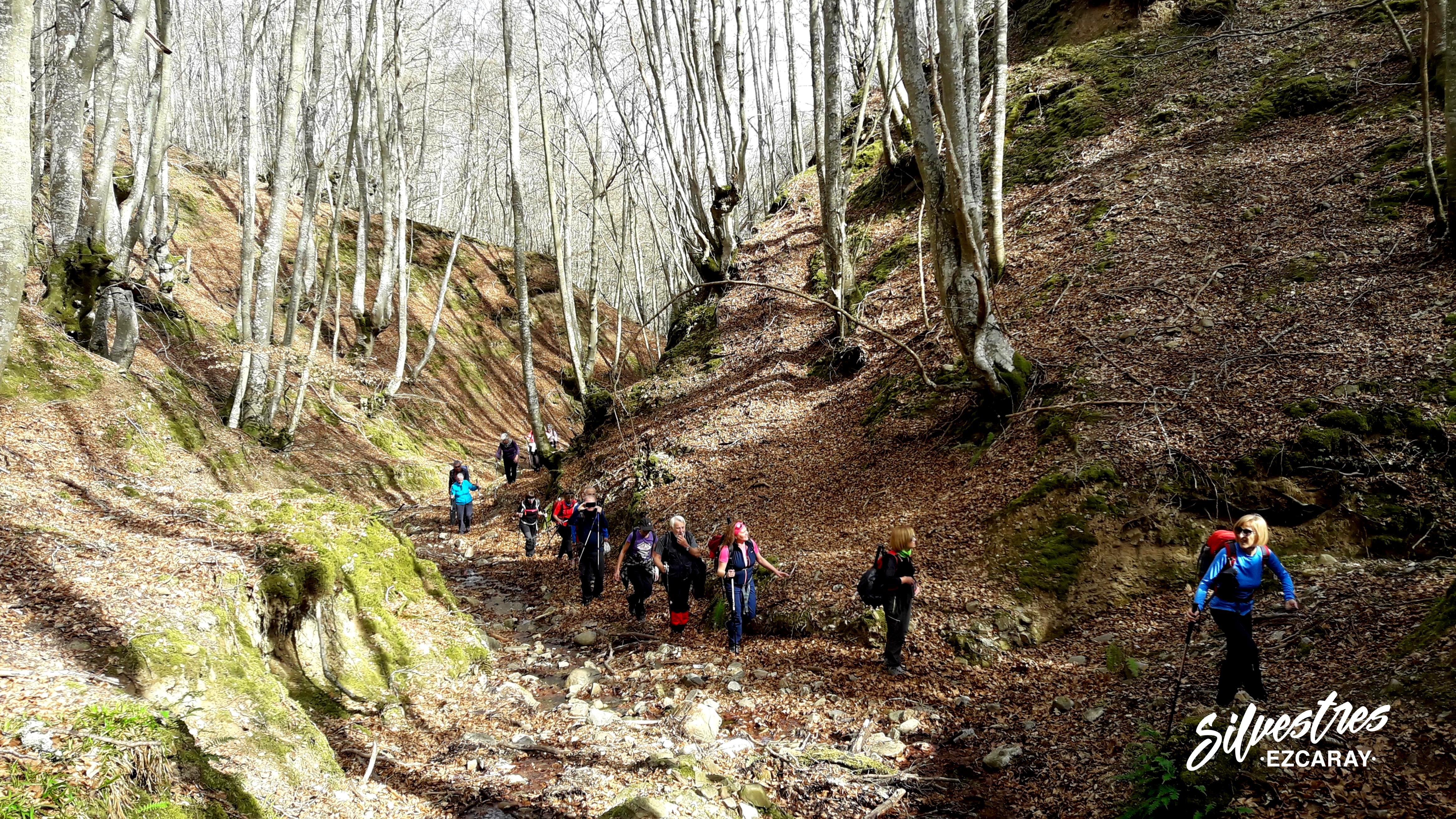 rutas_ezcaray_la_rioja_guia_montaña_naturaleza_silvestres_hayedos