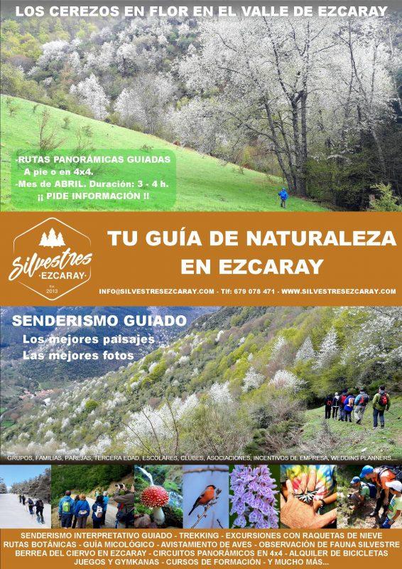 actividades_primavera_ezcaray_rutas_senderismo_cerezos