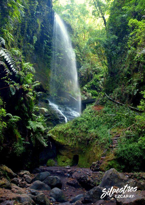 cascada_los_tilos_central_el_mulato_que_ver_la_palma_senderismo_viajar