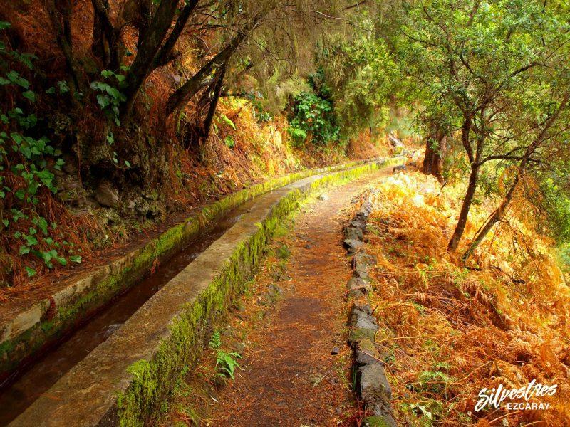 las_mejores_rutas_senderismo_canarias