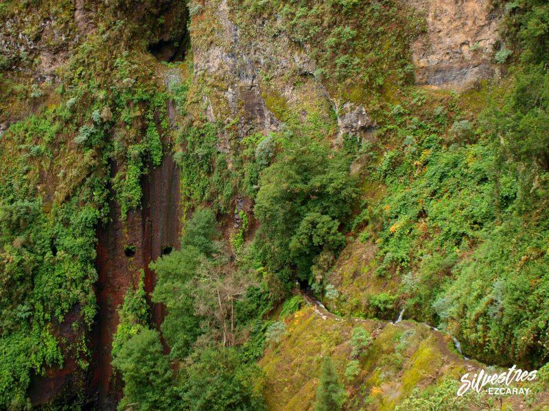 ruta_los_nacientes_la_palma_bosque_los_tilos_senderismo_paisajes_laurisilva