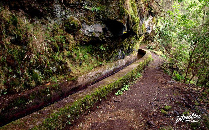 viajeros_silvestres_isla_palma_canarias_senderismo_los_tilos_nacientes_marcos_guia_montaña