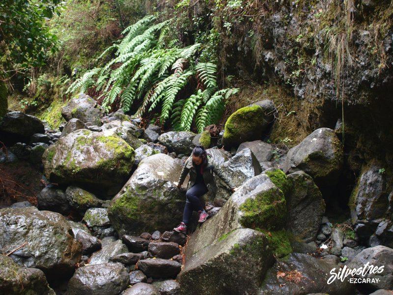 barranco_del_agua_parque_narural_las_nieves_senderismo_ruta_nacientes