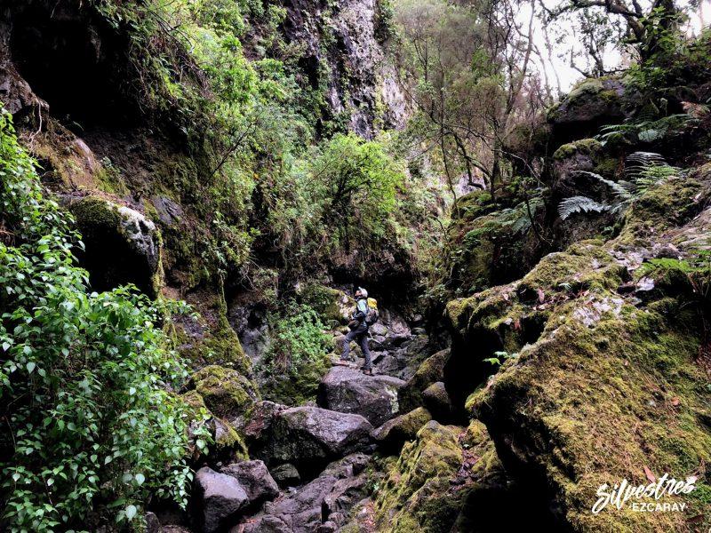 guia_montaña_naturaleza_isla_la_palma_sendero_marcos_cordero_barranco_del_agua