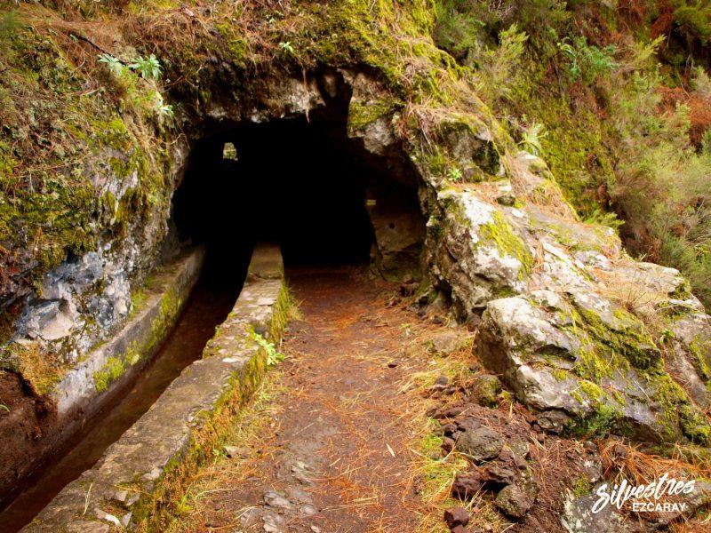 red_senderos_la_palma_pr_pequeño_recorrido_ruta_marcos_cordero