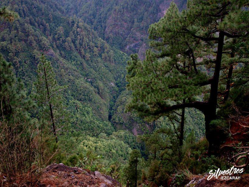 ruta_nacientes_marcos_cordero_historia_curiosidades_barranco_del_agua_la_palma