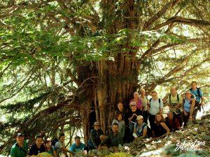 ruta_senderismo_sierra_demanda_tejo_fresneda_guia_naturaleza_montaña