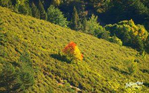 serbal_cazadores_rio_calamantio_alto_najerilla_paisajes_otoño