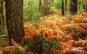 bosque_landas_vegetación_natural_restauración_diversidad_forestal