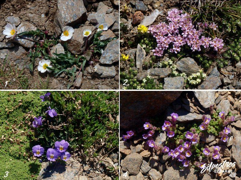 endemismos_botanicos_sierra_nevada_parque_nacional_lavaderos_reina