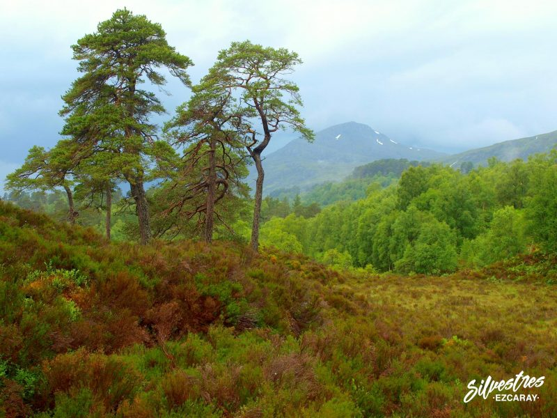 glen_affric_escocia_reservas_naturales_nacionales_historia