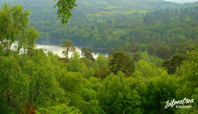 reserva_nacional_glen_affric_los_mejores_bosques_de_escocia