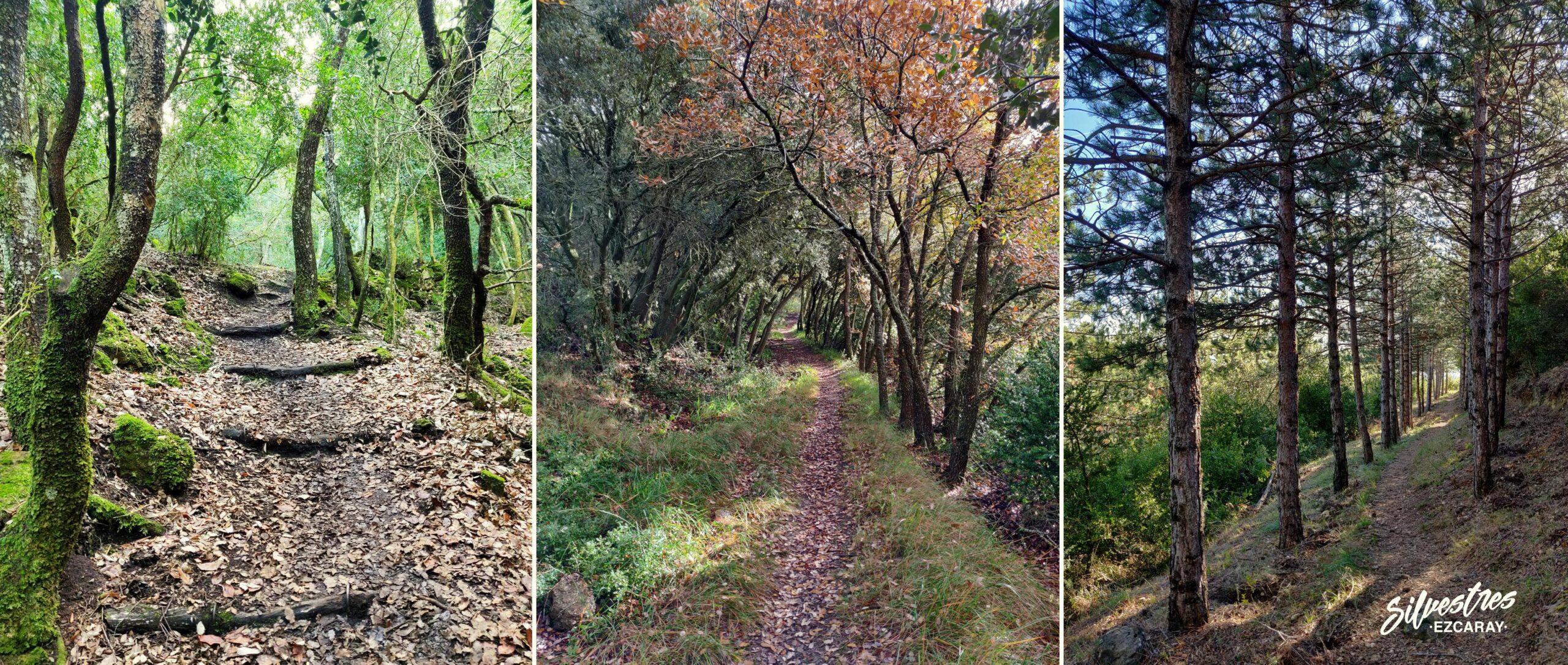 red_senderos_montes_obarenes_la_rioja_guia_montaña_silvestres_ezcaray
