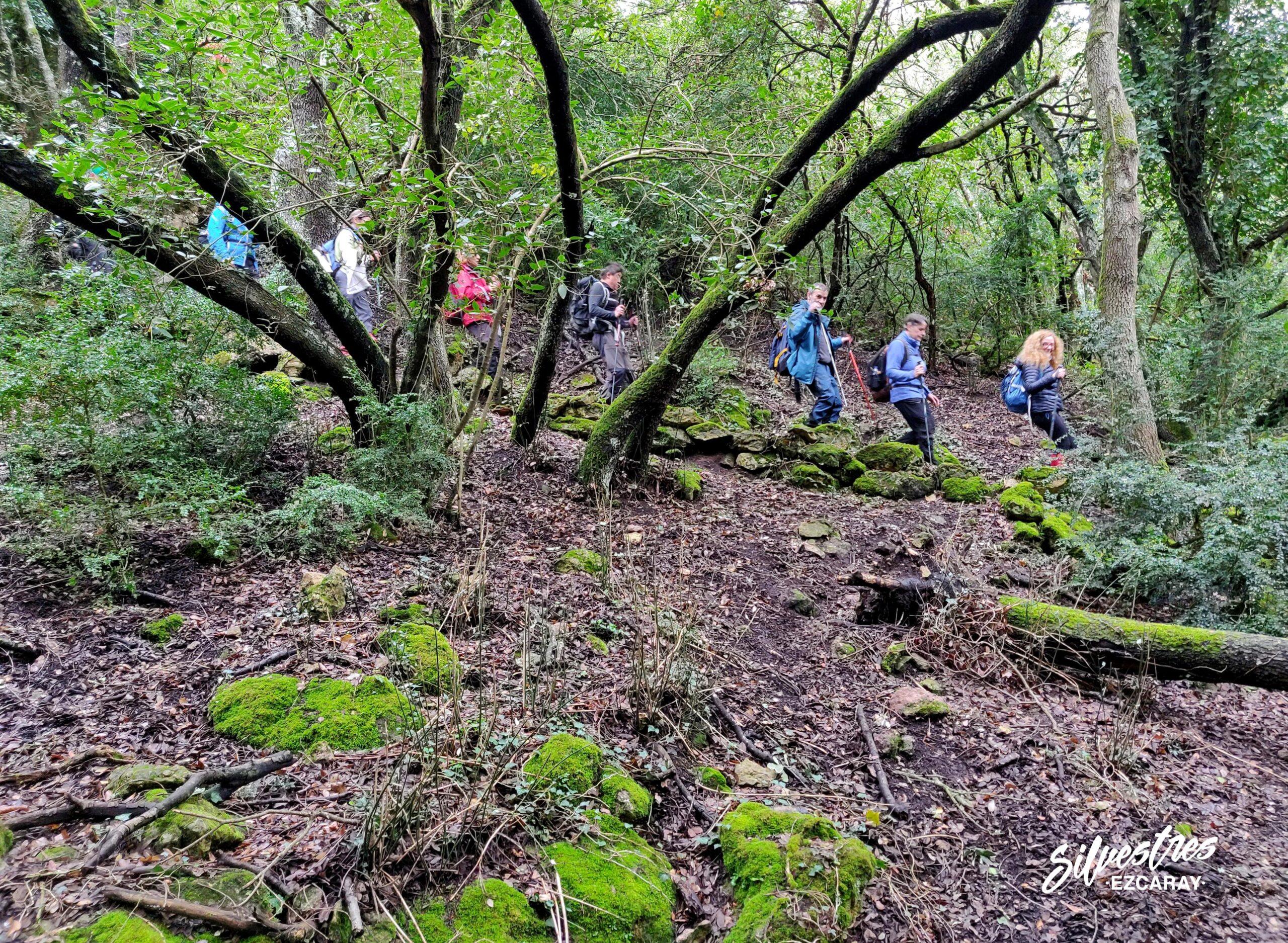 senderismo_rutas_tracks_montes_obarenes_senda_los_tejos_guia_montaña_naturaleza